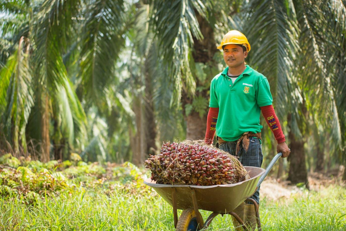 Producteurs huile de palme