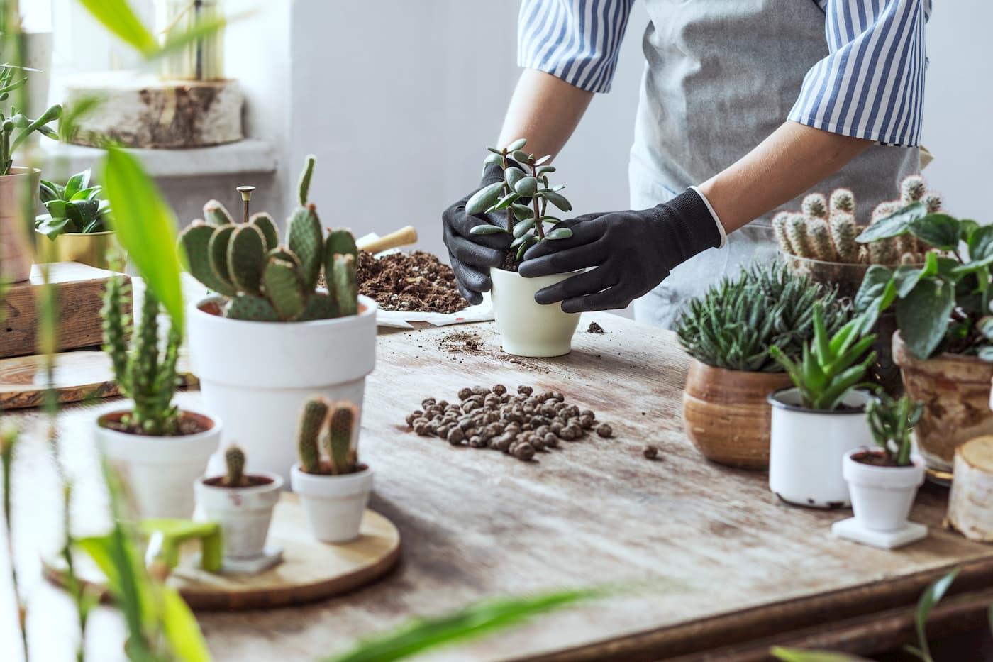 Comment Entretenir Une Plante Aloe Vera plante grasse : top 10 des plantes succulentes à posséder (+