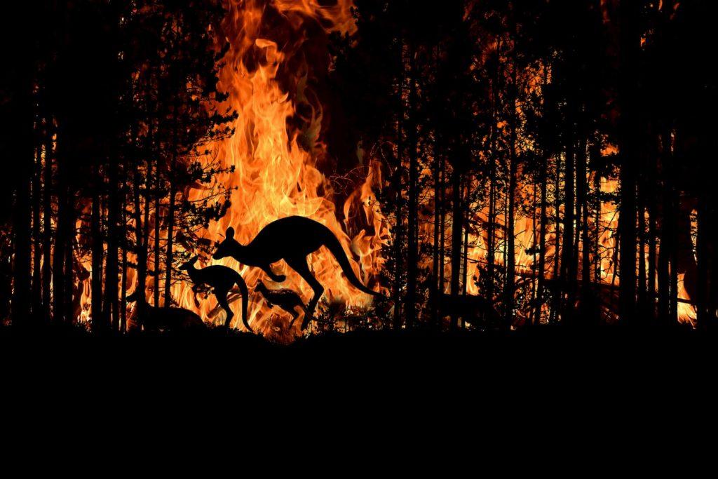 feux en australie